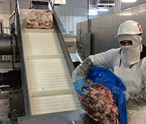 Inspection of bulk frozen meat joints following primary processing
